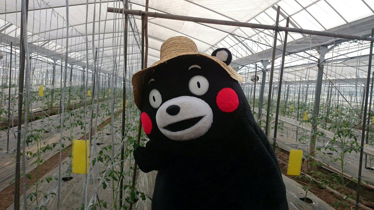 おはKUMAMONday〜☆今週もエイエイモーン!