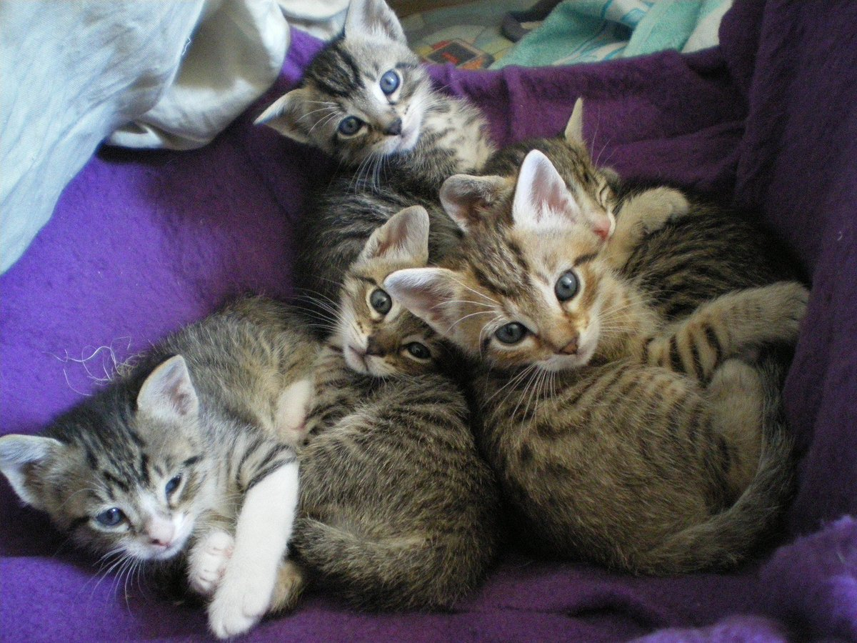 "Quite Interesting on Twitter ""A group of kittens is called a"