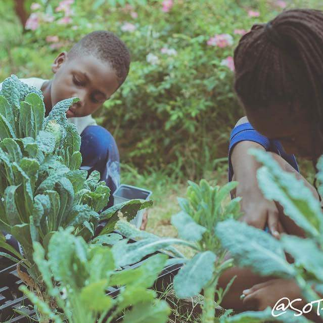 Reposting @nellaroots:Some shots of our garden babies harvesting Kale! #garden #community #south #dallas #texas #veggies #plants #education<br>http://pic.twitter.com/UjzzpSUKtq