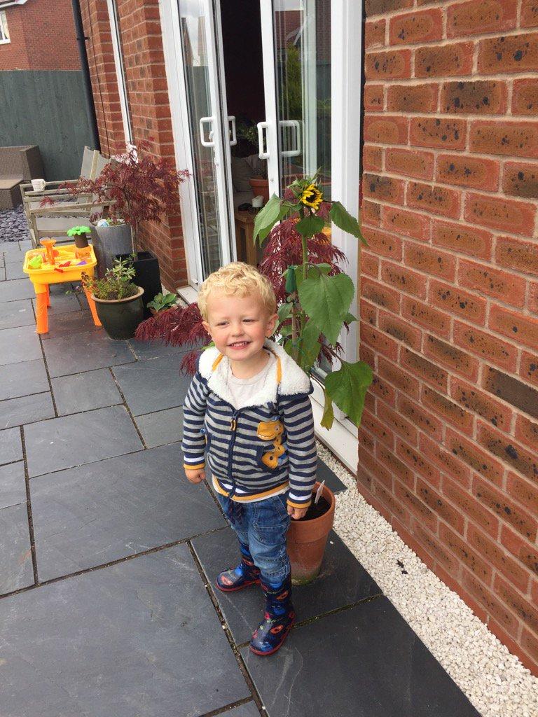 Finally taller than Seb! #greenfingers #sunflower @Ashbridge2to3<br>http://pic.twitter.com/I7Nht5iXtO
