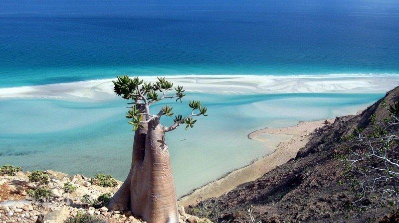Остров сокотра йемен фото