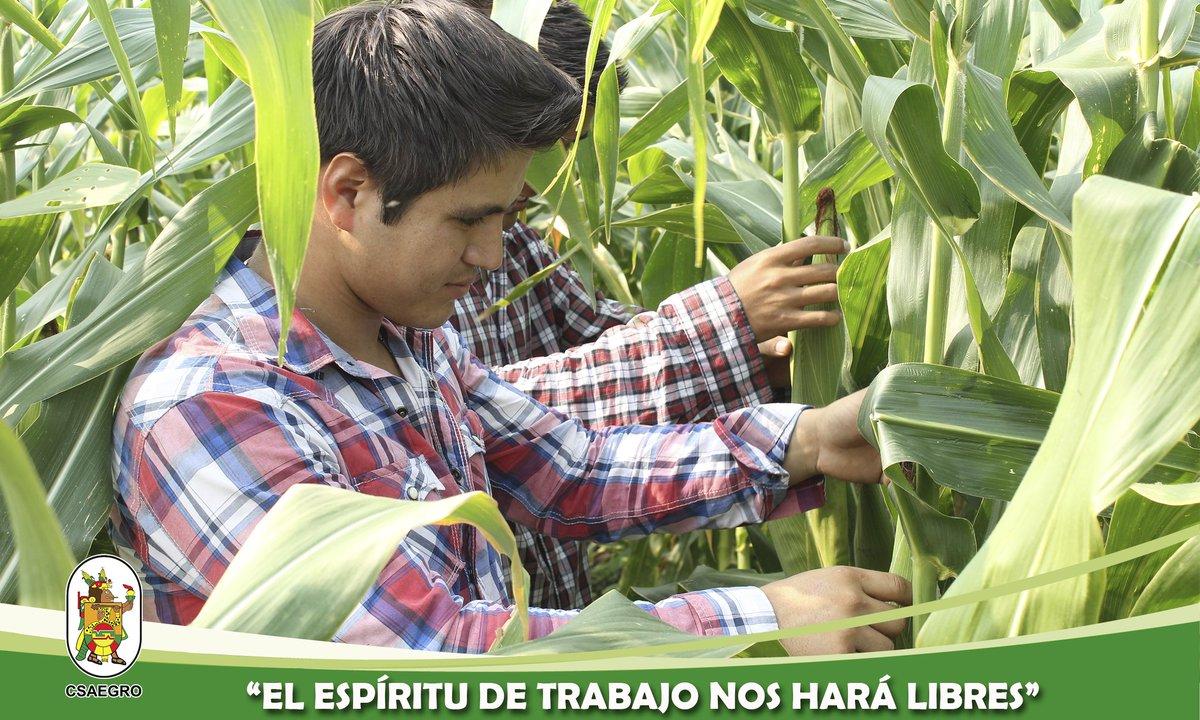 """""""Toda la Gloria del Mundo cabe en un grano de maíz"""" (José Martí) #espírituCSAEGRO"""