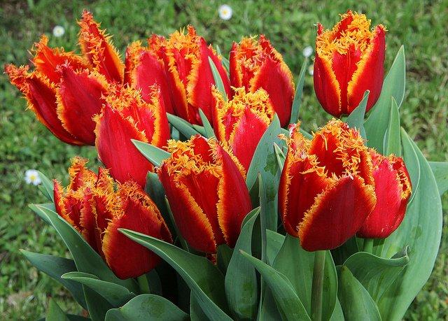 напольные цветы фото и названия