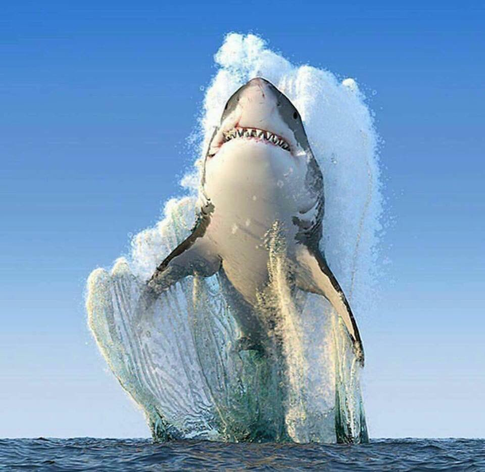 Me jumping to conclusion. #shark #sharkweek #funny #jokes #conclusion #joke #relationship #problem <br>http://pic.twitter.com/GUUWJFtDrx
