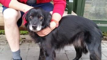 #found #BATH upper #BristolRoad running towards children&#39;s play area #VictoriaPark #BA1 13/8/17 dog has #french #chip<br>http://pic.twitter.com/3SlOp0Ddki