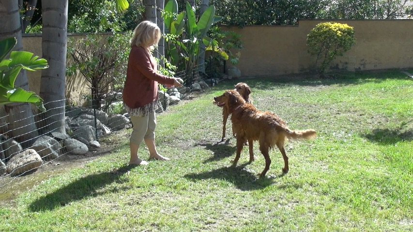 We sure do have #fun with our #mom!  Watch our #movie @  http:// crwd.fr/2tiTLKT  &nbsp;    #dog #puppy #travel #America #adventure #animals #pets #USA<br>http://pic.twitter.com/V1cZYUSnWz