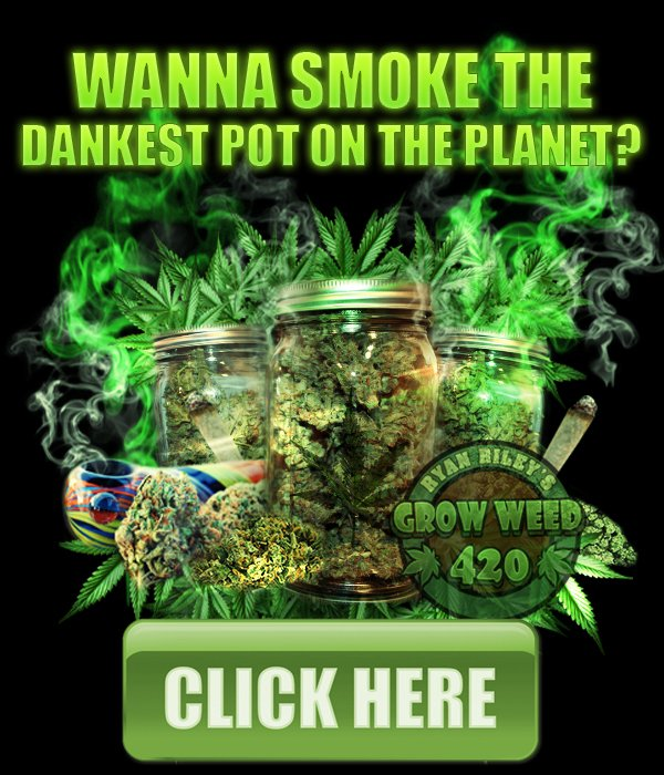 http:// bit.ly/2oRmHXA  &nbsp;   #LEARN#HOW#TOGROW# #POTHEAD #REEFER #MARYJANE #LOUD #SMOKING24/7 #AYYY #FIRE #POTENT #PUTONEINTHEAR<br>http://pic.twitter.com/r06JcBYqGE