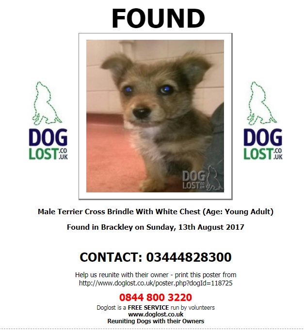 Found #young #male #terrier cross found in #Brackley #NN13 on Saturday now with #SDKEnvironmental (holding kennels)  http://www. doglost.co.uk/dog-blog.php?d ogId=118725 &nbsp; … <br>http://pic.twitter.com/FKn2SRZI1t