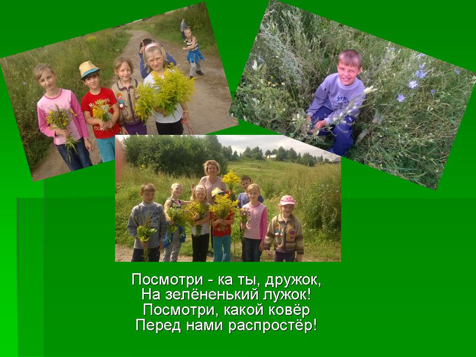 Лекарственные травы россии презентация