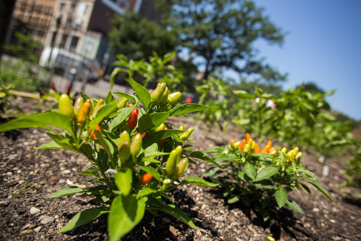 Nyu Steinhardt On Twitter Gardening In Nyc Yes It S Possible