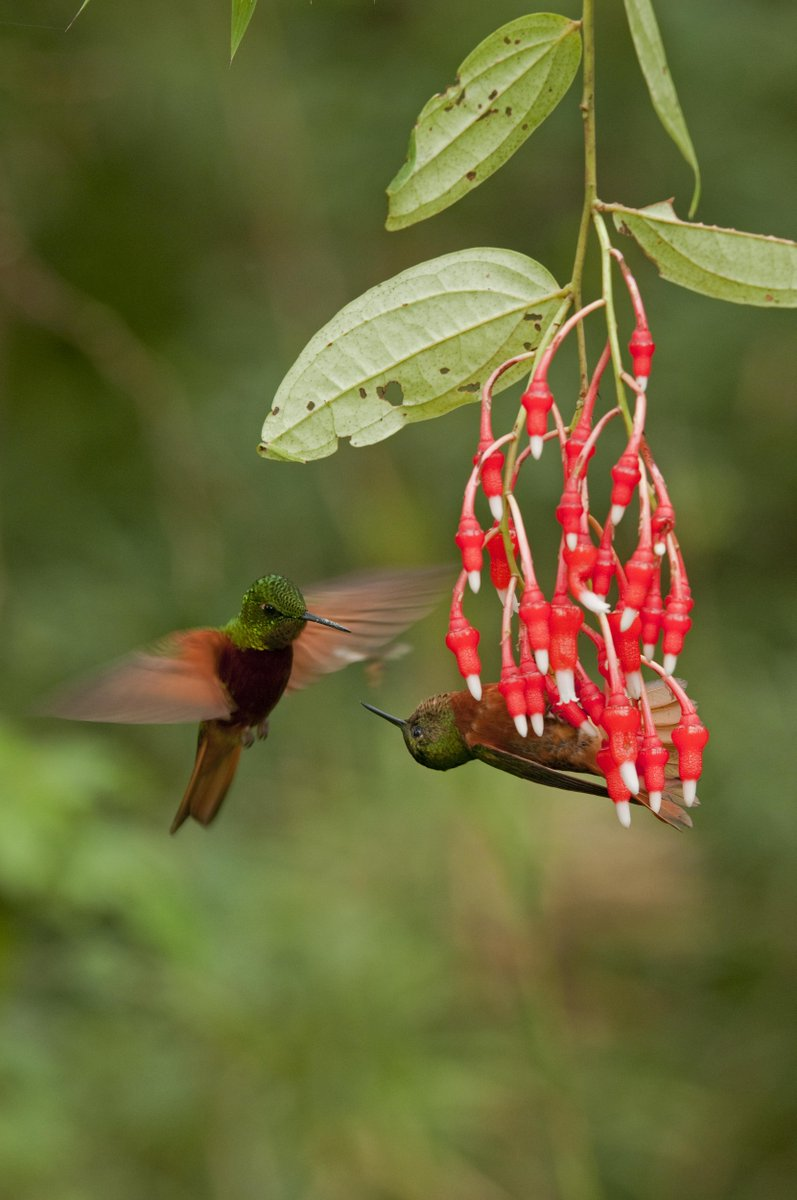 At #birdfair today? Pop along to the @VisitQuito stand to find out about #birdwatching in #Quito &amp; #Ecuador (marquee 7, stands 30 and 31) <br>http://pic.twitter.com/zZyr6joygJ
