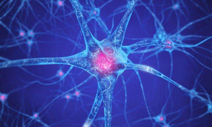 Células novas são produzidas em área cerebral considerada improdutiva https://t.co/TTpe8pD3xp