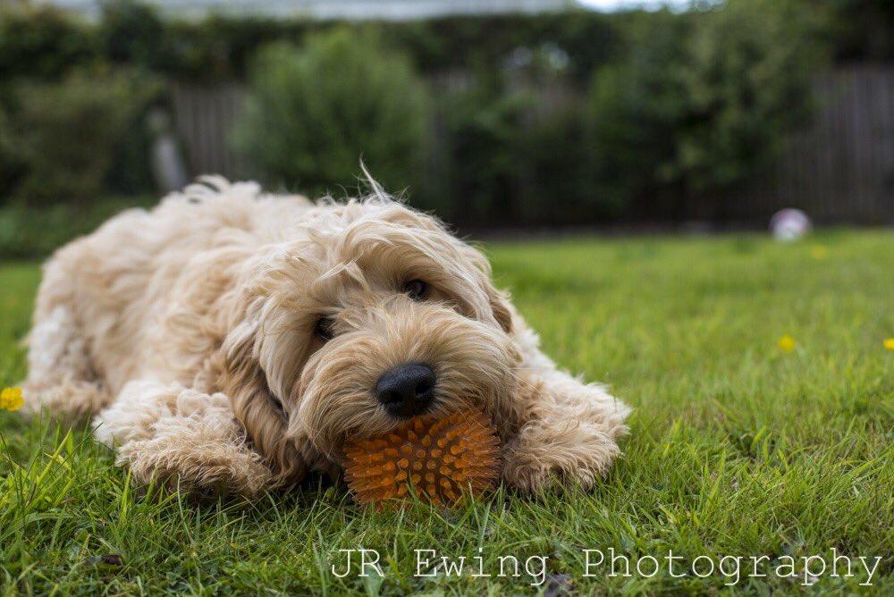 Harvey. @UKNikon @dogs @barks @letzpetni @DaiIyPups #petphotographer #NorthernIreland