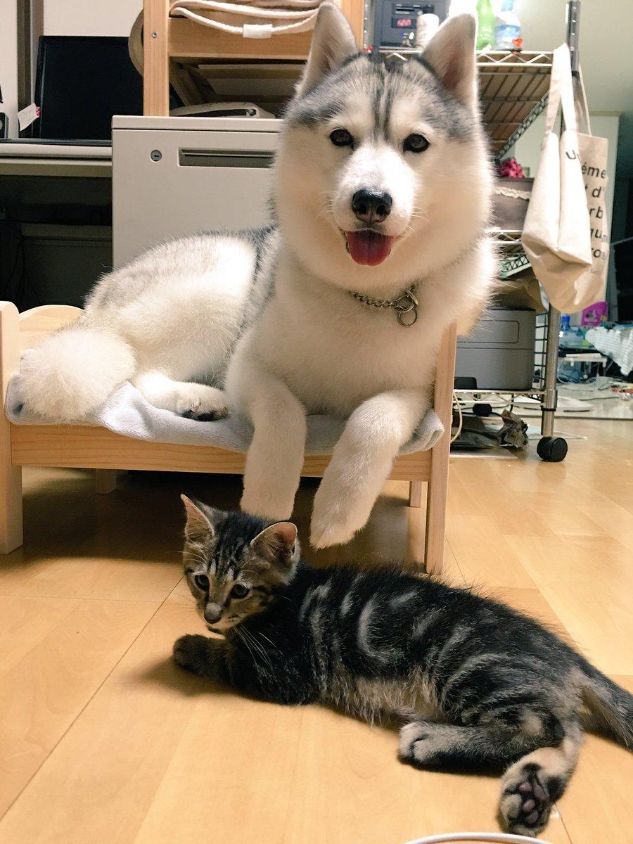 猫ベッドでくつろぐ犬!!!! pic.twitter.com/EOP73V5qi7