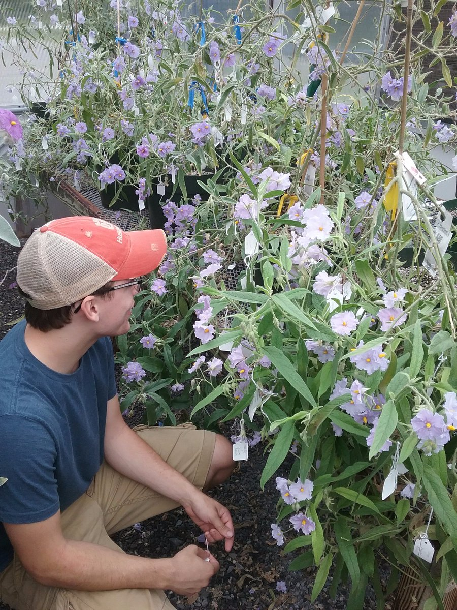 #Bucknell&#39;s Dan Hayes has done 4,000+ (!) hand-pollinations for his #undergrad honors thesis on Aussie bush tomatoes. #WhatIDidLastSummer<br>http://pic.twitter.com/kNEKqW5A1f