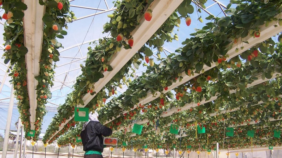 Sharing is Caring! #Israel teaches how 2 grow in the desert &amp; how 2 fight #desertification w/ #watermanagement  https://www. israel21c.org/teaching-the-w orld-how-to-make-the-desert-bloom/ &nbsp; … <br>http://pic.twitter.com/VOUo1WjkCW