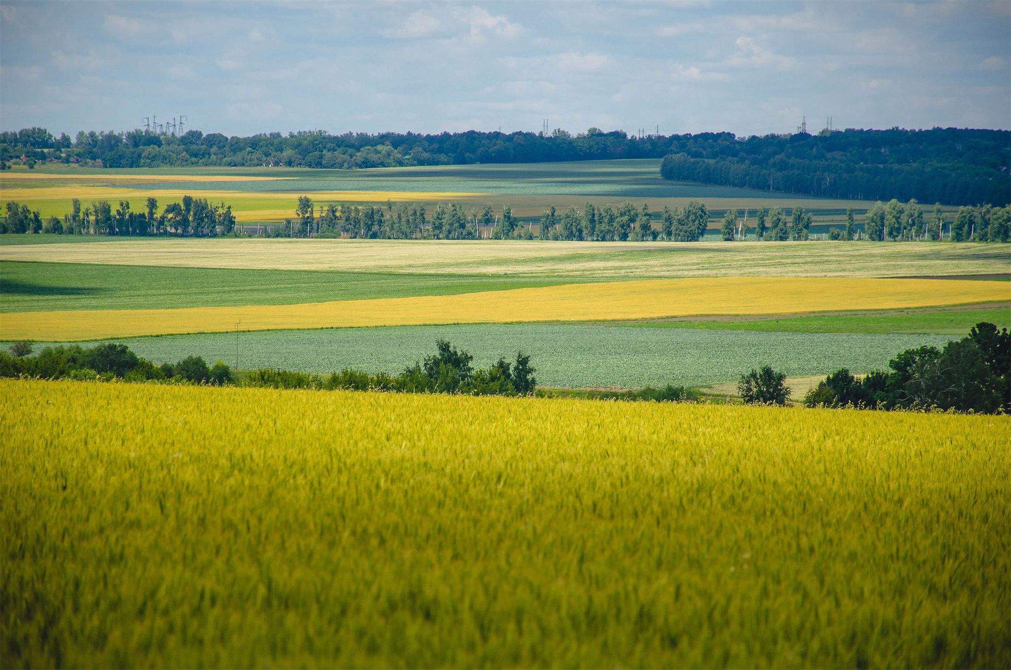 понимание фото лучшие виды русских полей мне подборку