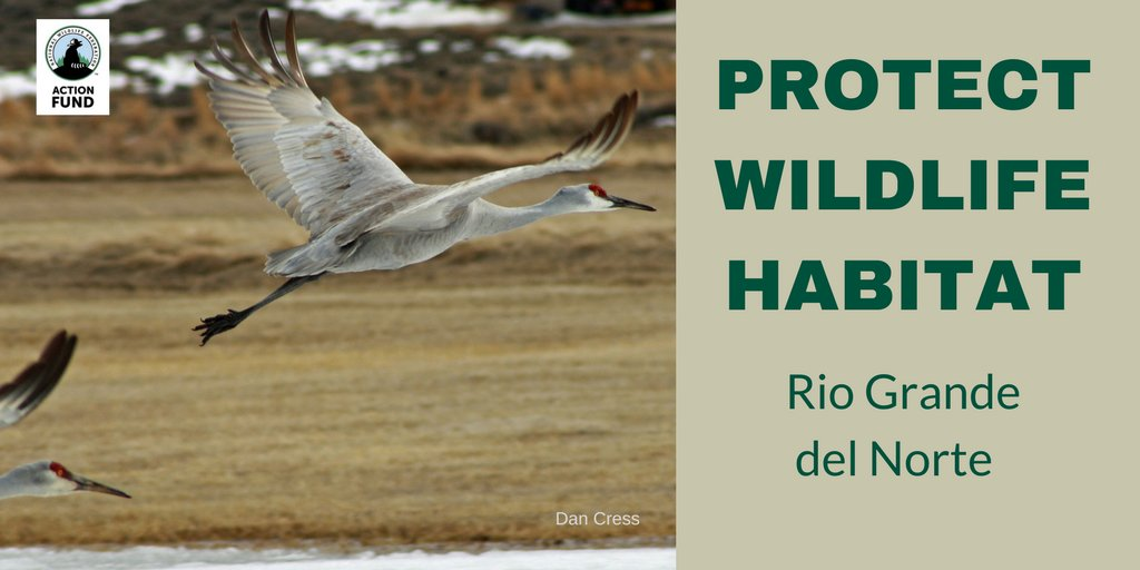 Sandhill Crane National Wildlife Federation >> Wildlife Action On Twitter Interior Keep Rio Grande Del Norte