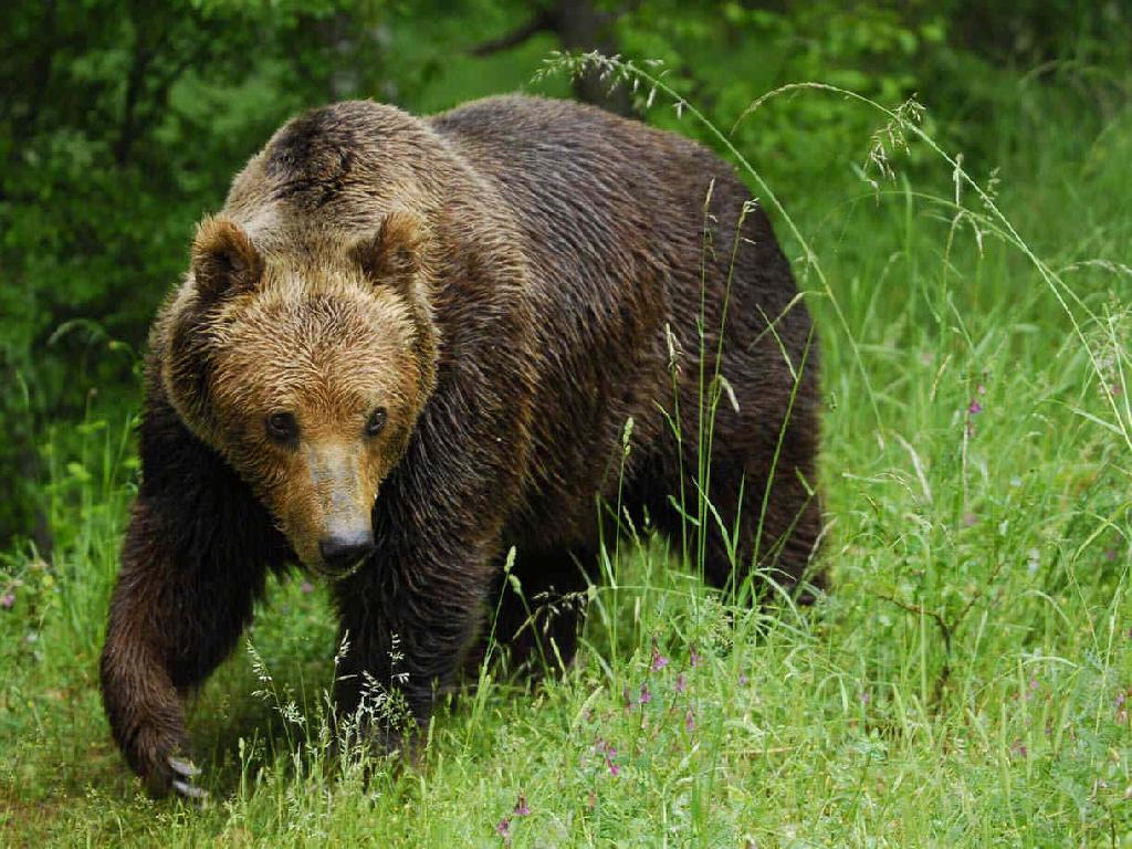 bear conservation bearconserve twitter