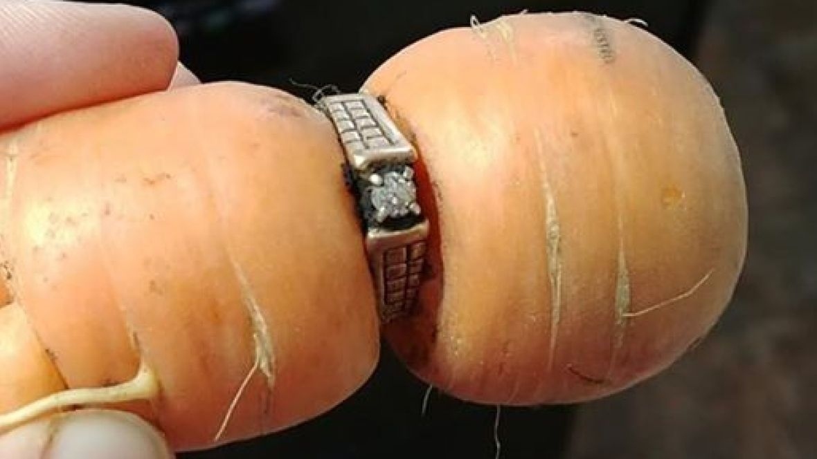 'It still fits': Diamond ring missing since 2004 turns up on garden carrot https://t.co/amH57med02