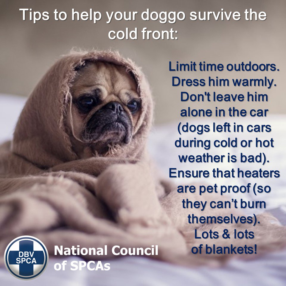 Remember to help your #pets keep warm during the #coldfront