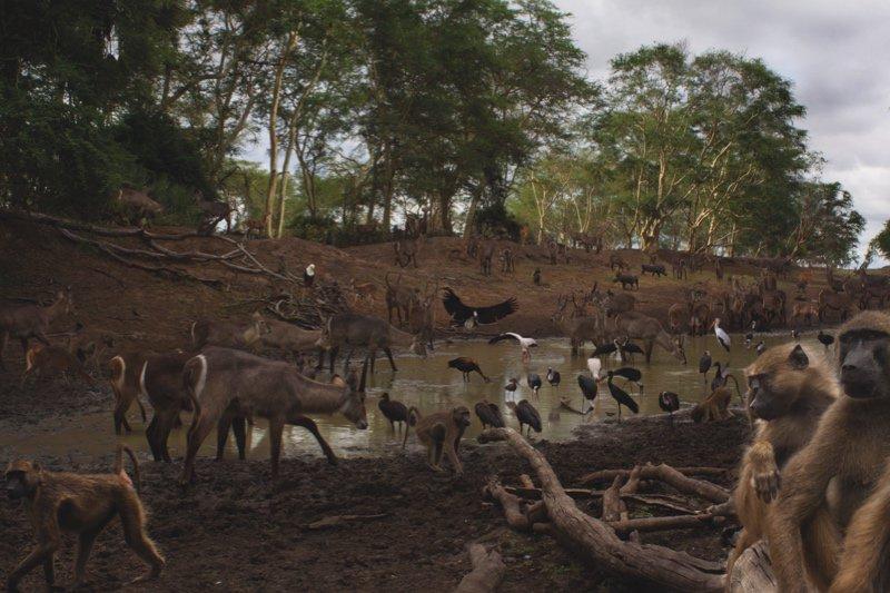 Meet the wild residents of Gorongosa National Park, Mozambique, in our online gallery  https://t.co/L7hnjC4J6e  📷@jen_guyton / @naskrecki