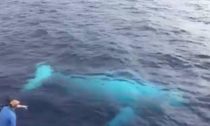 Rara baleia jubarte albina é avistada na Austrália https://t.co/le4N6Wgxv4