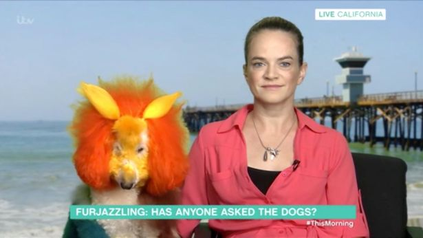 Dog owner accused of 'cruelty' and 'exploitation' after 'furjazzling' her pooch to look like a triceratops https://t.co/X6reyw80zZ