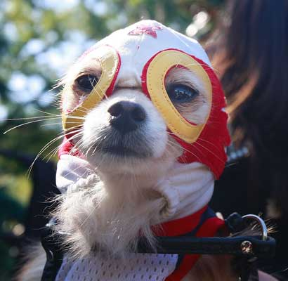 because I love #Lucha Dogs. <br>http://pic.twitter.com/3KoFSgV88B