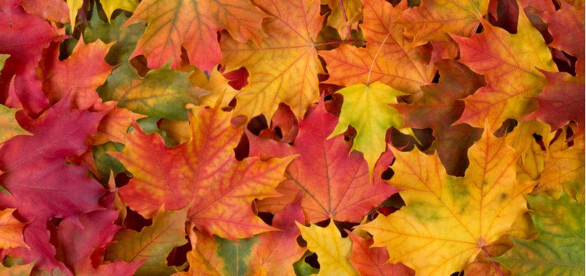 #Sellers increase #sales with #autumn #opportunities! Here are other niche #holidays to #generate greater #profits.  http:// social.payoneer.com/tO67  &nbsp;  <br>http://pic.twitter.com/8VXmyVLHQT