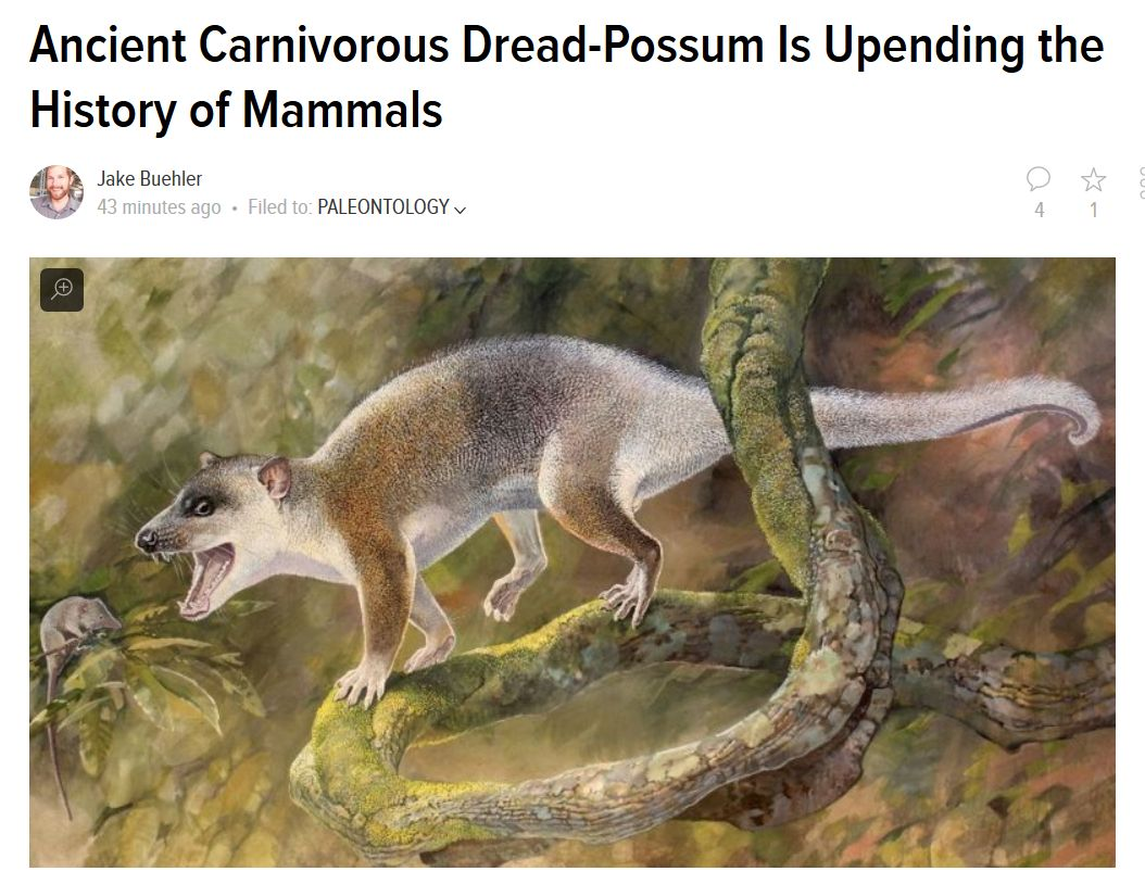 Anatoliadelphys makes Gizmodo, with a suitably low-key headline -  http:// gizmodo.com/ancient-carniv orous-dread-possum-is-upending-the-histor-1797874552 &nbsp; …  Paper available here:  http:// journals.plos.org/plosone/articl e?id=10.1371/journal.pone.0181712 &nbsp; …  #OA <br>http://pic.twitter.com/dAgaMq4RXX