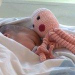 カルターニャだけの習慣!赤ちゃんにタコのぬいぐるみが渡される理由とは・・・