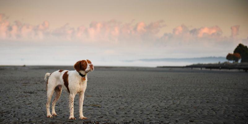 Il prend une année sabbatique pour retrouver son chien 🐶▶https://t.co/l5FBbrl2TQ