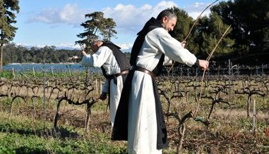 Harvesting grapes has started on St Honorat Island #Cannes The monks of the Lérins Abbaye have been cultivating grapes for over 1600years <br>http://pic.twitter.com/fnhoVXaL2E