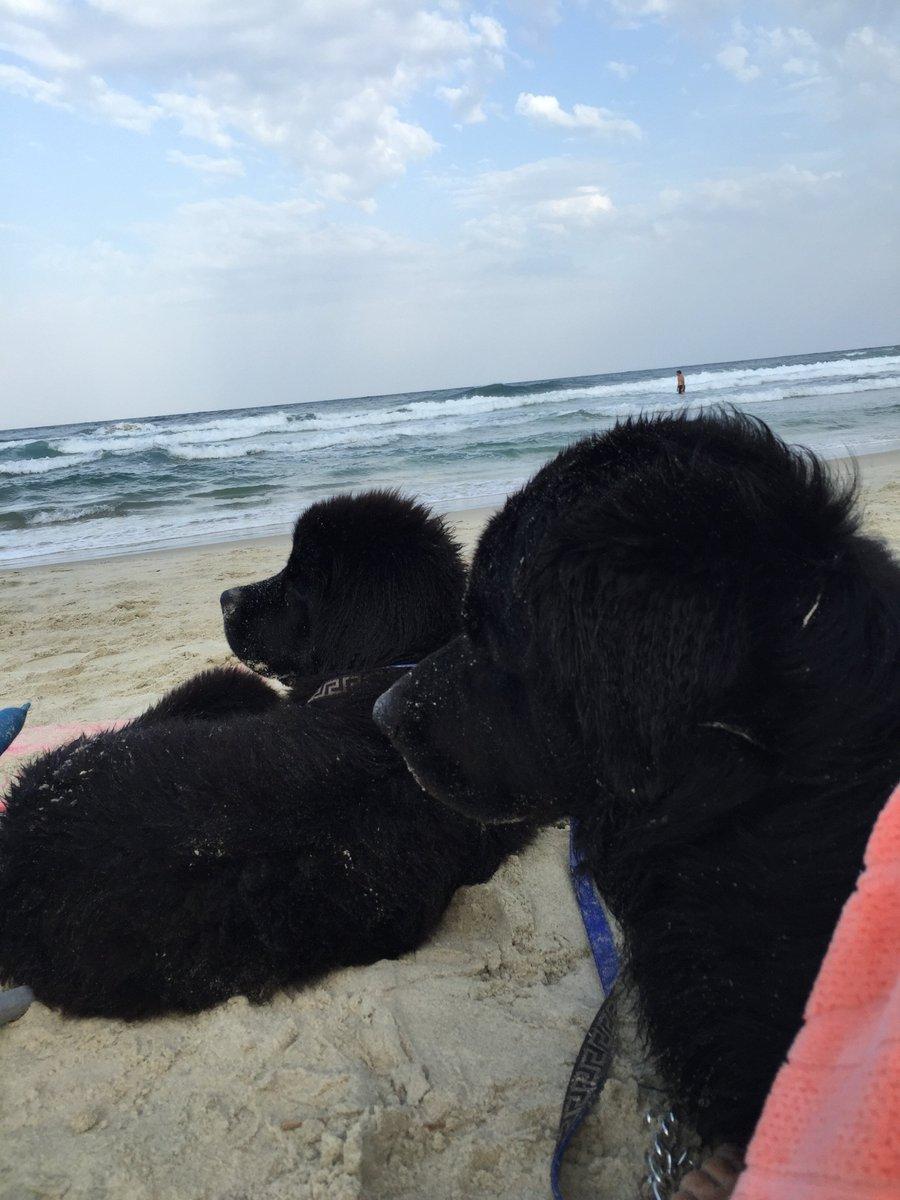 This is the place we belong to                        #newfoundland #newfoundlanddog #dog #newfie #pet #puppy #beach #summer #sea #greece<br>http://pic.twitter.com/rzwzWuvWFZ
