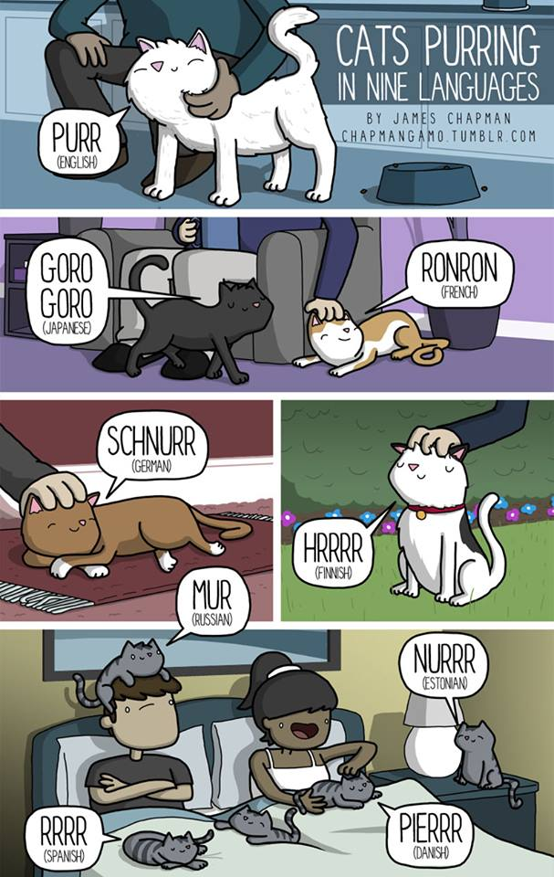 Comment #ronronner en 9 #langues / How to #purr in 9 #languages #SummerClass<br>http://pic.twitter.com/X9HArn4WJQ
