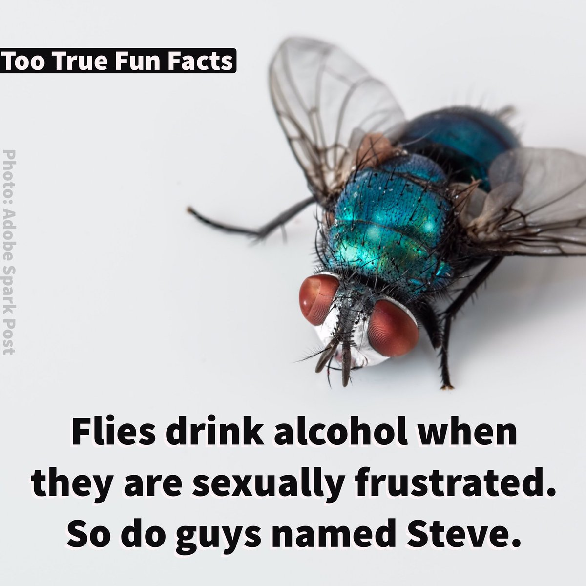 True strange facts about sex