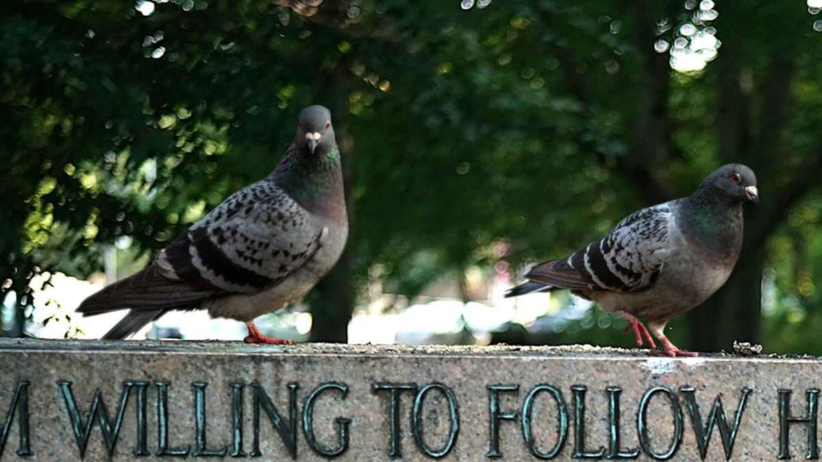 Baltimore Pigeons Shocked To Find Beloved Shitting Statues Gone https://t.co/k2wDDrD463