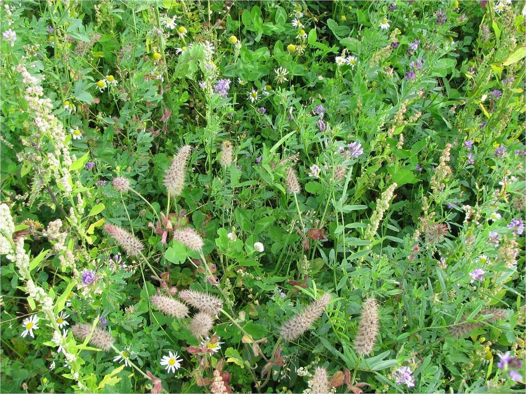 Fantastic #interactive &amp; #userfed #wiki providing vast amounts of info on #covercrops &amp; #livingmulches!  http:// ow.ly/607c30dM9XZ  &nbsp;   @OrgResCent<br>http://pic.twitter.com/rJsgc046lM