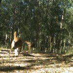 Read #more on our #work to support #landholders & stop #pest #animals on the #CentralCoast via the #ExpressAdvocate https://t.co/rTDCA4jQgB