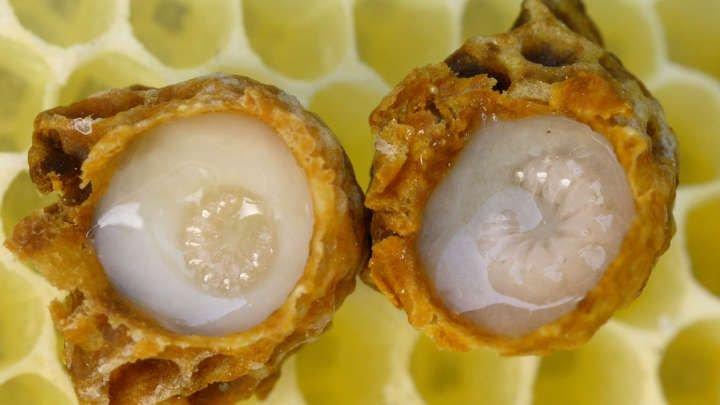 Scientific proof that #royaljelly has healing properties. #tapcomb #protein #defensin-1 #bees #queenbee #beekeeper  https:// buff.ly/2wPHnUW  &nbsp;  <br>http://pic.twitter.com/LFiqjUWVcj
