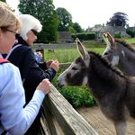 On today's walk from Brimpsfield we met a couple of donkeys.