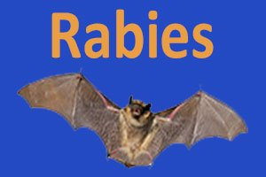 A bat picked up from the 1900 block of N Bell by Animal Services has tested positive for rabies. More info:  http:// bit.ly/2uQn20I  &nbsp;   #Denton <br>http://pic.twitter.com/1oSCr41O0U