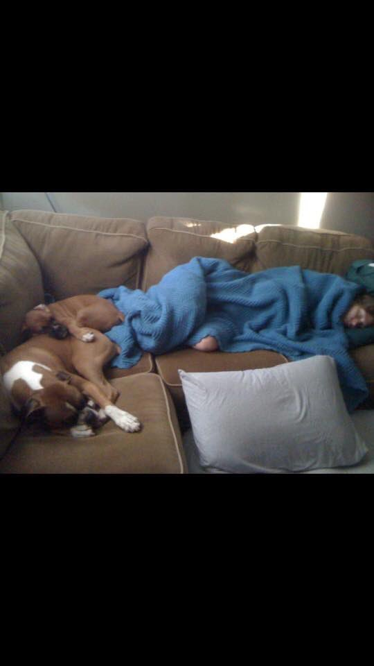 Love this memory of Sparta and puppy Apollo and me fast asleep when we first moved in #boxers #boxerdogs<br>http://pic.twitter.com/zyfGkkpYJ5