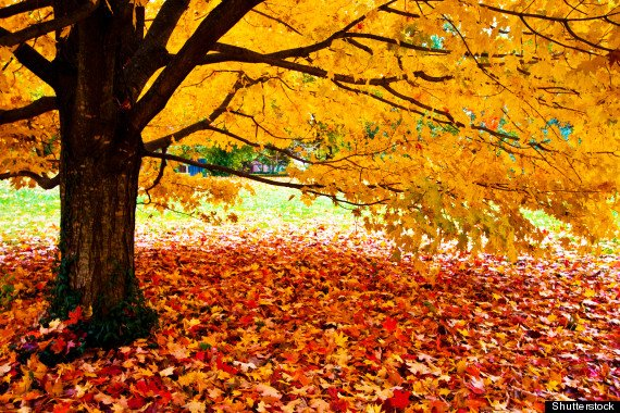 Is Selling in the Fall a Good Idea? #RealEstate #RealEstateMarketing  http:// wp.me/p4TphZ-Oq  &nbsp;  <br>http://pic.twitter.com/4FNqymunkX