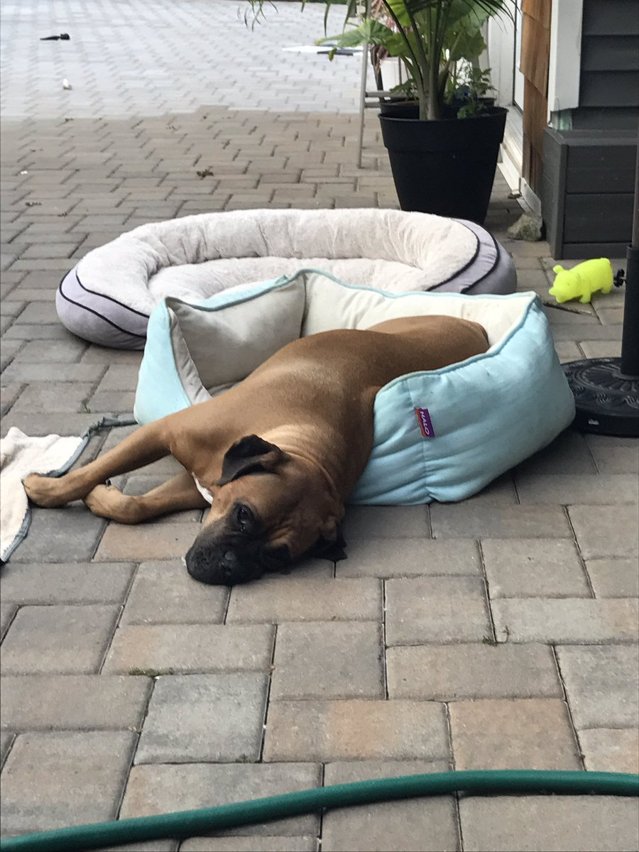 It&#39;s so hot that Titans melting #boxers #boxerdogs<br>http://pic.twitter.com/5OZZ7q6rGF