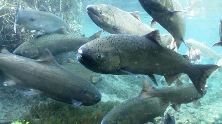 Changing tides: Lake Michigan could best support lake trout and steelhead https://t.co/aVihnwwdoH https://t.co/Sip0Yozj3N