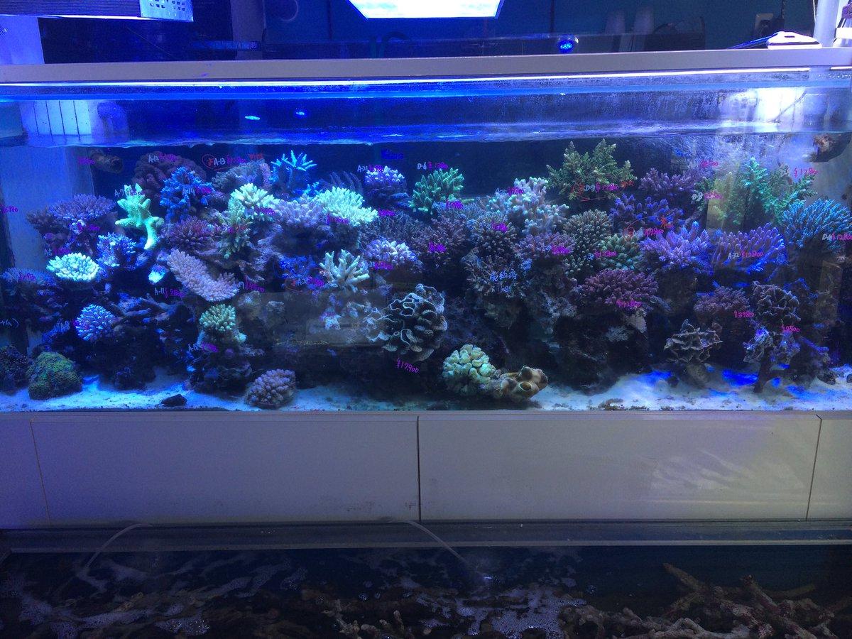 海水 魚 生麦