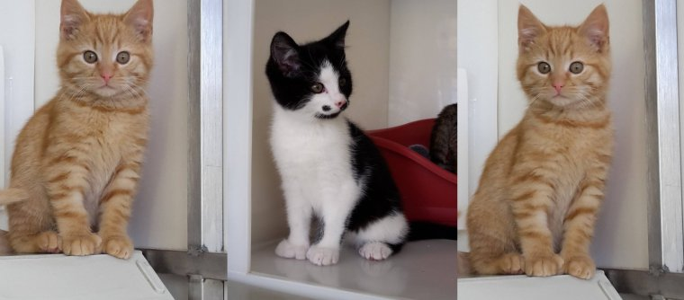 Meet Fingers and Thumbs – the paw-some pair with knockout appeal!  https:// katzenworld.co.uk/2017/08/13/mee t-fingers-and-thumbs-the-paw-some-pair-with-knockout-appeal/ &nbsp; …  #cats #cute #catlovers<br>http://pic.twitter.com/qpI9hbIBcz