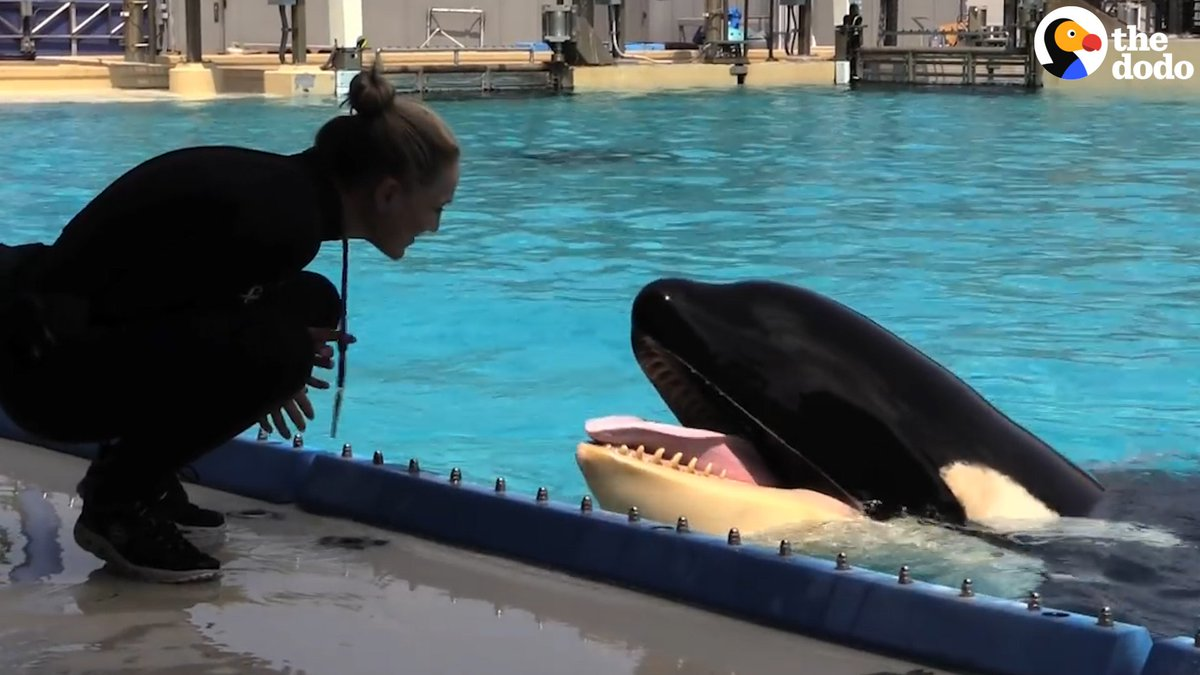 Kasatka just died at #SeaWorld — after t...
